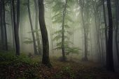Mysterious forest with fog