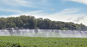 Irrigating Soybean Field