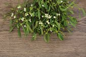 Christmas mistletoe plant with berries over oak background.
