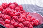 Sieving Raspberries