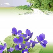 stock photo of realism  - Hand drawn vector illustration of violets in realistic style - JPG
