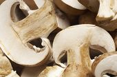 Champignons, close-up