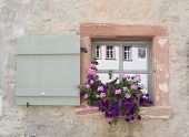 Window and Flower boxes