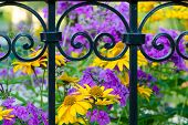 Wrought-iron Fence With A Blurred Background Of Flowers