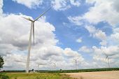 picture of cassava  - Wind turbine in cassava farm for generating electricity - JPG