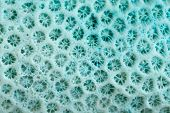 Blue Coral Structure Background, Close Up