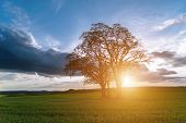 pic of inri  - Sunset over spring field in country with green crop - JPG