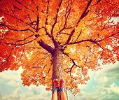 feet resting on a tree trunk during fall when the leaves are turning colors toned with a retro vinta