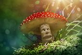 picture of face-fungus  - Fantasy mushroom in the forest - JPG