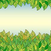 frame of summer leaves