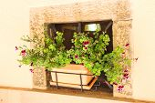 foto of niche  - Pot of flowers in a niche walls of the house - JPG