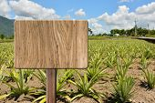 Blank wooden sign on field of pineapplef arm. Concept of rural, idyllic, tranquility etc.