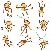 Cute funny monkeys