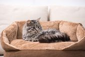 stock photo of tabby cat  - Cute cat is lying in his cat bed - JPG