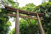 Torii (entrance Gate) And Tree In Temple Area ,japan