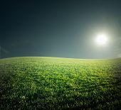 Field with green grass