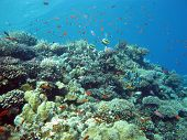 foto of bottom  - coral reef with hard and fire coral and exotic fishes at the bottom of tropical sea - JPG