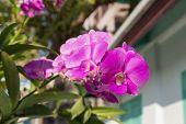 viole orchid under the sun light