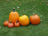 picture of jack-o-laterns-jack-o-latern  - the pumpkins have been picked and are now posing with an autumn back drop - JPG