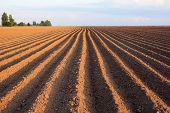 picture of plow  - flat strip of plowed land stretching to the horizon - JPG