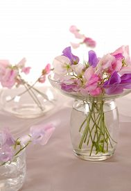 stock photo of sweet pea  - Bouquet of beautiful sweet peas flowers - JPG