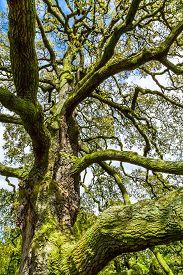 foto of algae  - Closeup of an old tree covered in algae - JPG