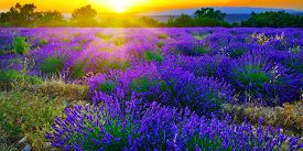 pic of plateau  - Stunning landscape with lavender field at sunset - JPG