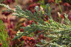 stock photo of juniper-tree  - Juniper Tree Green Carpet on multicolor background - JPG