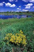 Sturgeon River Wildlife Area