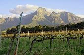 Typical Western Cape Rural Scene