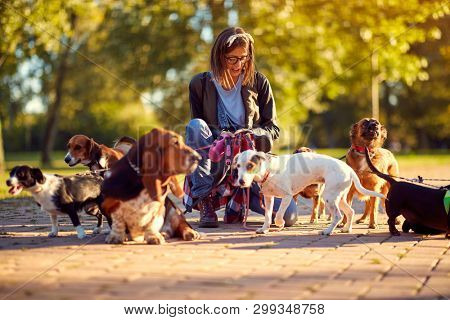 poster of Happy group of dogs with woman dog walker enjoying in walk outdoors.