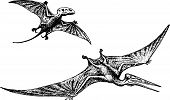 stock photo of pterodactyl  - Pterodactyl or Pteranodon dinosaur flying on white background - JPG