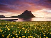 Kirkjufell mountain near Grundarfjordur city, Iceland. Landscape with yellow flowers on the ocean an poster