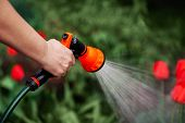 View Woman Hands Watering Plants From The Hose, Makes A Rain In The Garden. Gardener With Watering H poster