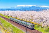 Japan Landscape Scenic View Of Tohoku Train With Full Bloom Of Sakura And Cherry Blossom, Hitome Sen poster