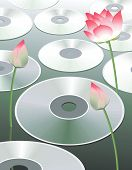 Discs And Lotus