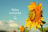 Inspirational Quote- Welcome Summer Greetings. With Smiling Sunflower Blossom Welcoming New Season.  poster