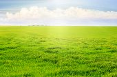 Field With Green Grass, Flooded With Sunlight. Light White Clouds Over A Meadow With Green Grass poster