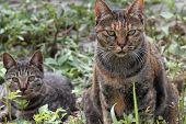 Gatos vadios