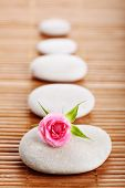 Spa stone and flower rose