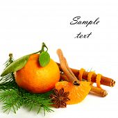 stock photo of tangerine-tree  - tangerine - JPG