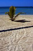 Nosy Be Madagascar Beach