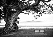 Banco bajo el árbol solitario