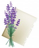 Retro-styled background with lavender bunch and a leaf of paper