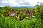 Picturesque Village In Bali