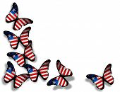 Liberia Flag Butterflies, Isolated On White Background
