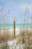 "picture of sea oats  - ""Keep Off Dunes"" sign is posted on beautiful sandy beach dunes surrounded by sea oats. - JPG"
