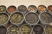 samples of loose leaf green, white, black red, and herbal tea in metal cans on canvas background