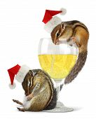 foto of chipmunks  - Funny drunk santas chipmunks dress santa hat with champagne glass - JPG
