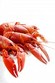 picture of craw  - Fresh boiled crawfish on white isolated background - JPG